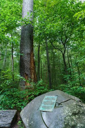 The Joyce Kilmer Memorial