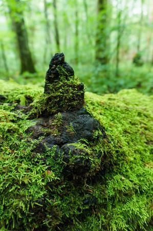 Moss on a Knob on a Log