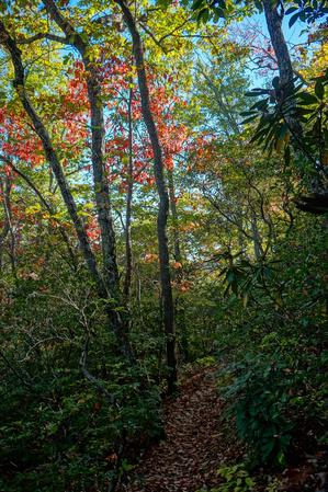 Fall Color on the Big Piney Ridge Trail