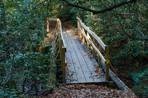 Harry Bryan Trall Junction Bridge