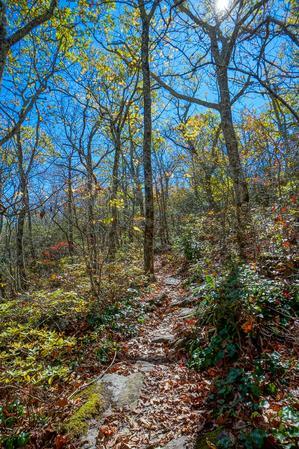 Walkers Knob Trail