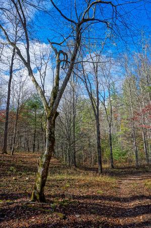 Old Clearing along Big Fork Ridge Trail
