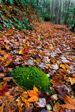 Mossy Patch in Fall Leaves