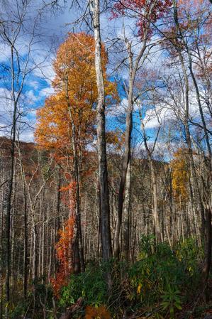 Lone Autumn Tree