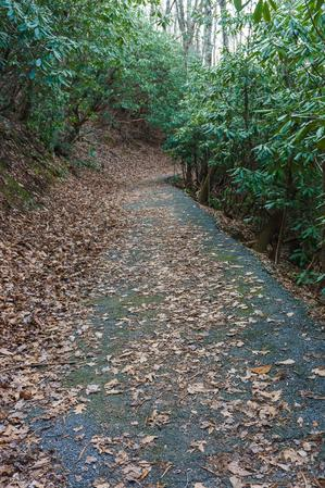Paved Stretch of Rainbow Road Trail
