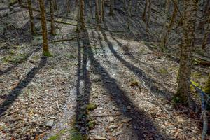 Emerging Sun on the Walker Creek Trail