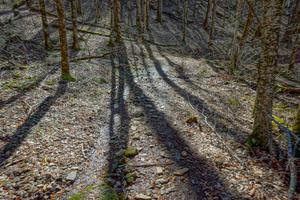 Emerging Sun on the Walker Creek Trail