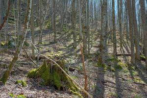 Mossy Stumps on the Walker Creek Trail