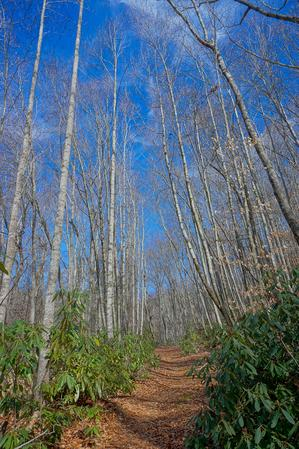 Tall Trees on the Walker Creek Trail