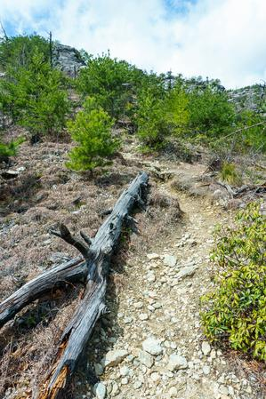 Dead Wood on the Pinch-In Trail