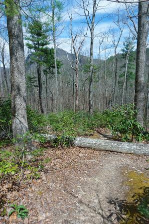 Flatter Trail Near the River