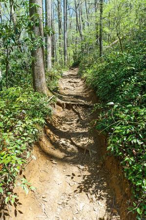 Eroded Section of Daniel Ridge Loop