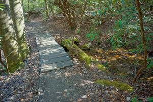 Mossy Bridge Timbers on the Daniel Ridge Loop Trail