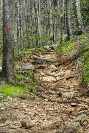 Rocky Eroded Section of Daniel Ridge Loop Trail