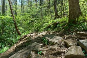 Rocky Section of Daniel Ridge Loop Trail