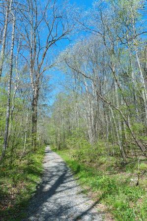 Start of the Daniel Ridge Loop Trail