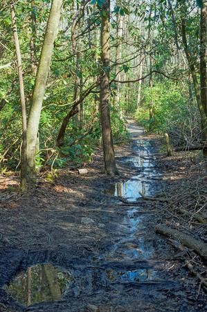 Wet Section of the Daniel Ridge Loop Trail