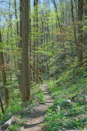 Early Spring Foliage on the Farlow Gap Trail