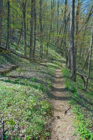 Open Section of the Farlow Gap Trail