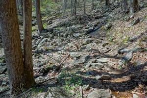 Rocky Section of the Farlow Gap Trail