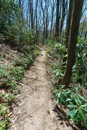 Farlow Gap Trail through Rhododendron