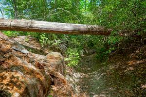 Log Over Erosion Gully on Long Branch Trail