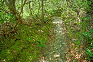 Mossy Gulch on the Long Branch Trail