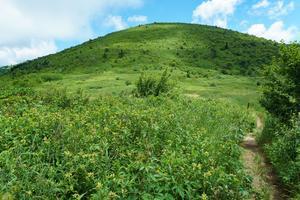Art Loeb Trail Approaching Ivestor Gap