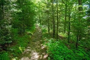 Ivestor Gap Trail Near Shining Rock Gap