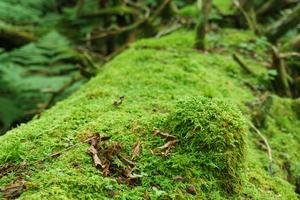 Mossy Knob on a Log