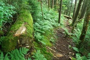 Mossy Log Beside the Mountains to Sea Trail