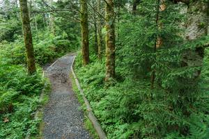 Old Mitchell Trail on Ridge
