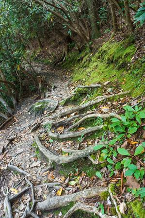 Roots on the Linville Falls Plunge Basin Trail