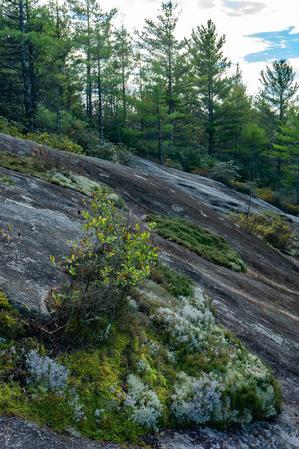 Rocky Summit of Little Green Mountain
