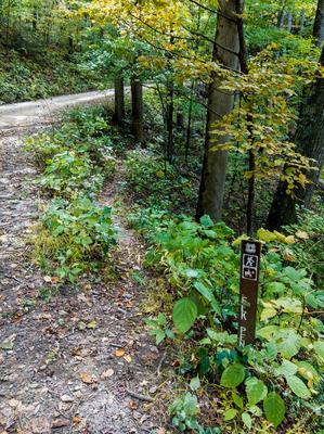 Upper End of Elk Pen
