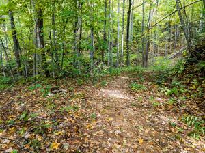 Wide Spot on Upper Corner Rock Trail