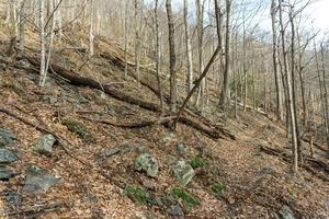 Rocky Mountainside on the Buck Spring Trail