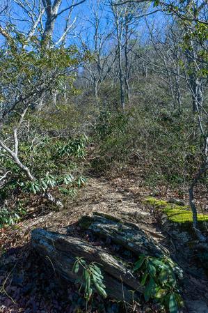 Rocky Head Trail on the Ridge