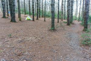 Campsite Under the White Pines