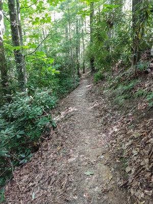 Sidehill Section of North Harper Shortcut Trail