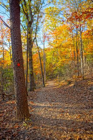 Fall Color at Sunset on the Rumbling Bald Loop Trail