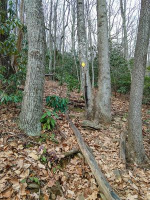 Steep Section of Stomping Knob Trail