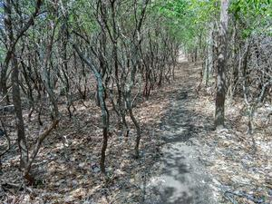 Twisted Laurels on the Buckwheat Knob Trail