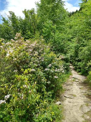 Open Sunny Area on the Flat Laurel Creek Trail