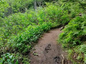 Forest Opening on Richland Balsam