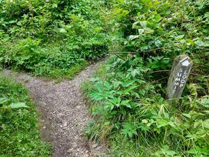 Richland Balsam Trail Split