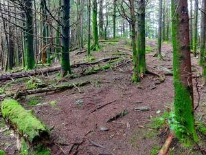 Richland Balsam Trail near the Summit
