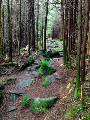 Rocky Section of Richland Balsam Trail