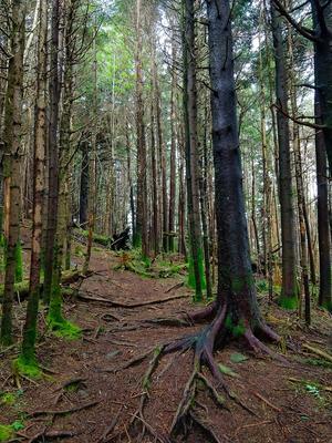 Spruce-Fir Forest on Richland Balsam
