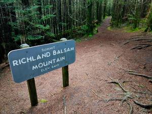 Summit of Richland Balsam